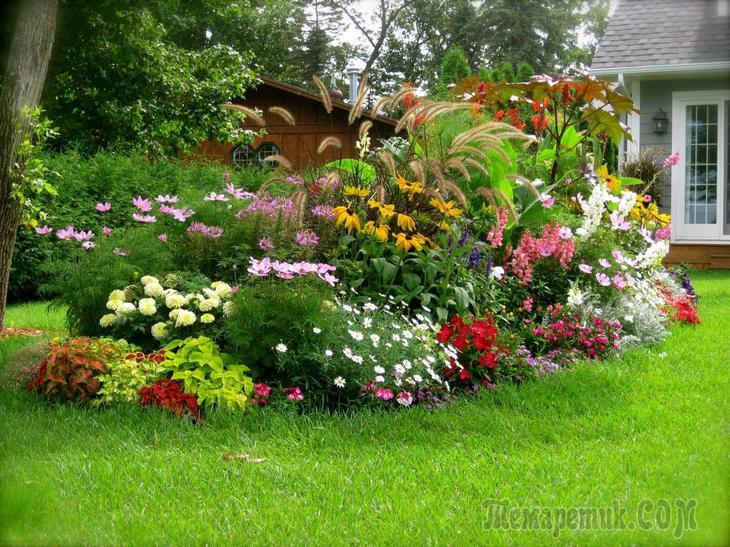 Секреты известных садоводов: как омолодить старый сад правильно: