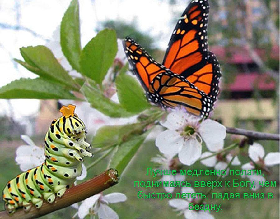 Бабочки и гусеницы