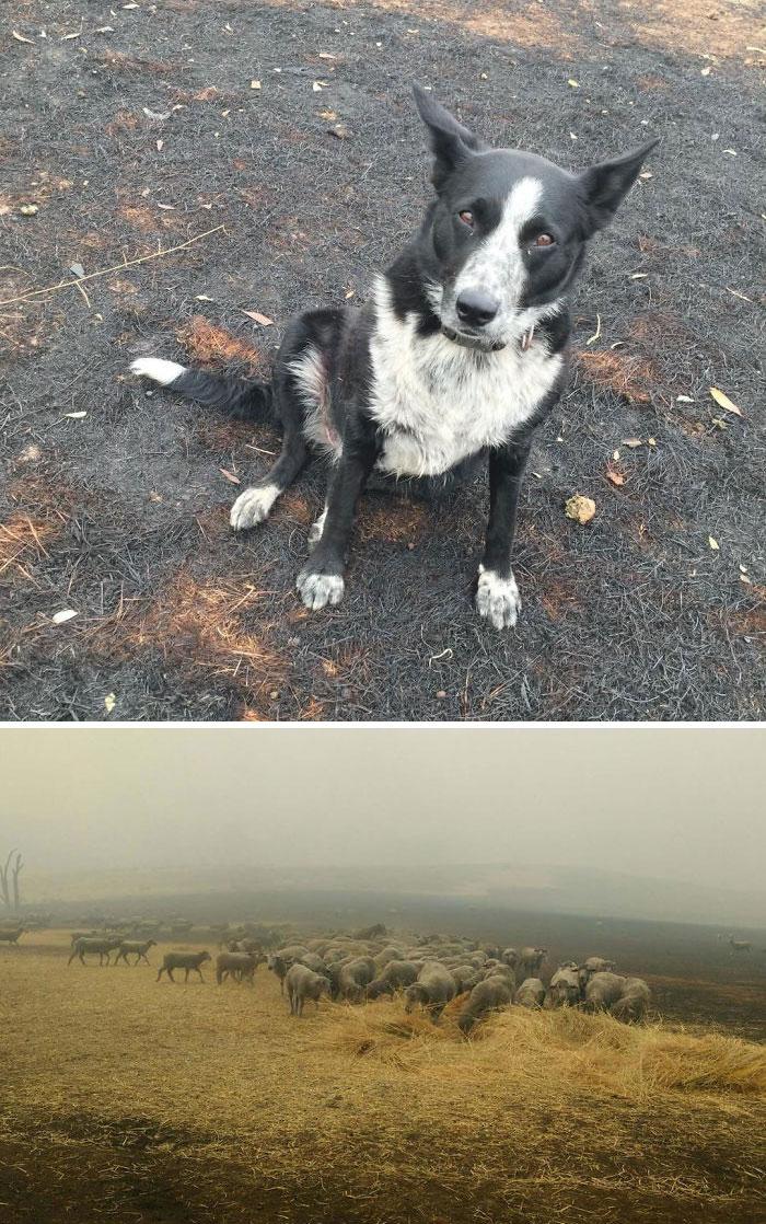 У — Уважение: 29 фото о том, как в Австралии спасают животных Австралия,коалы,общество,природа