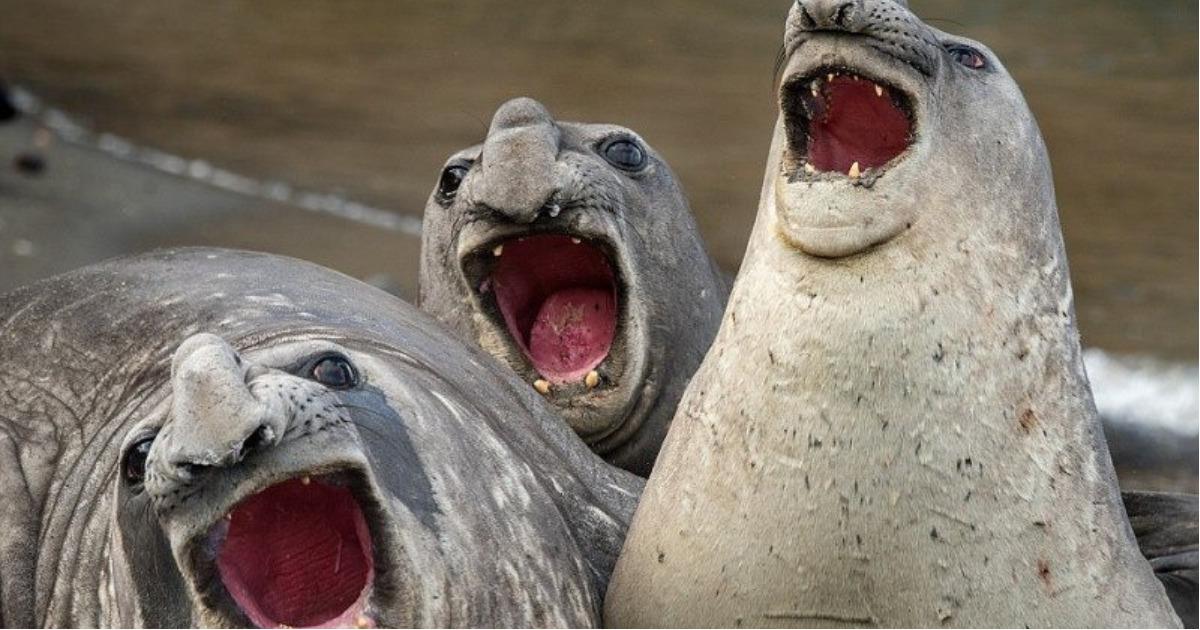 Дикие, но симпатичные! Необычные фото, на которых животные веселятся на полную! :)