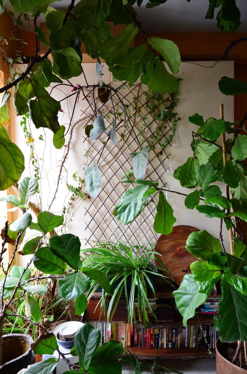 Решетчатая конструкция средь растений и книг