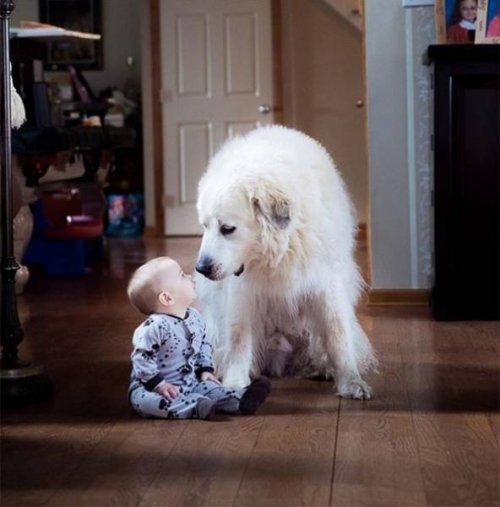 Дети и собаки — лучшие друзья навеки!