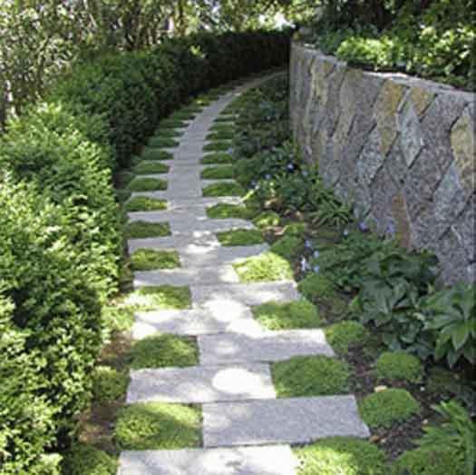 Мох + камень дача, дорожки, сад