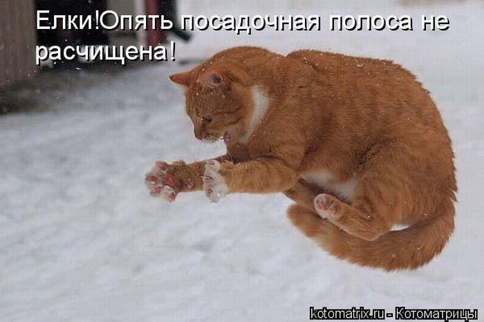Говорят коты!