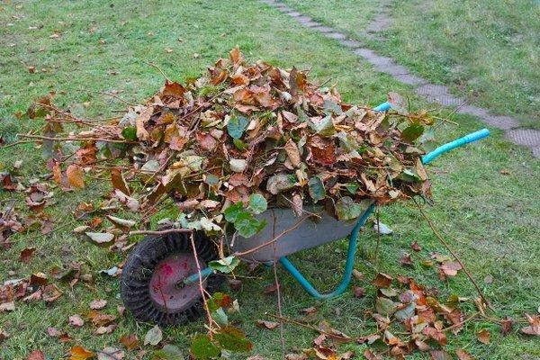 5 самых полезных применений листвы в огороде