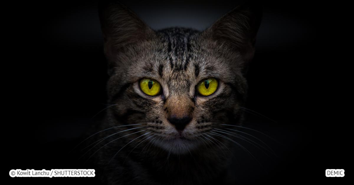 Коты реально защищают дом от злых духов и негативной энергии! Вот почему