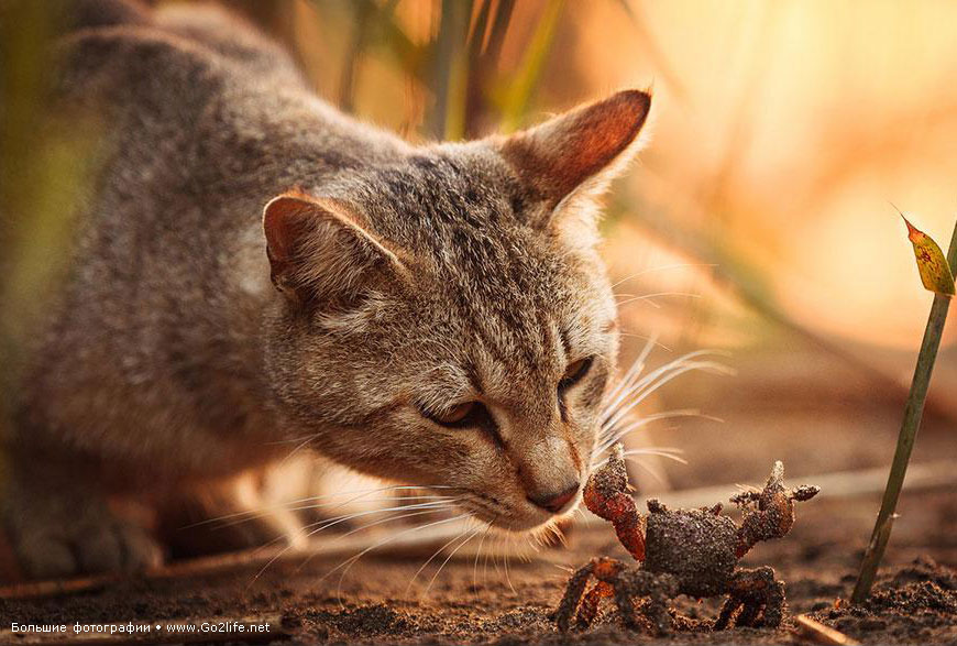 Солнечные кошки учат людей многому в любой момент их жизни - 1