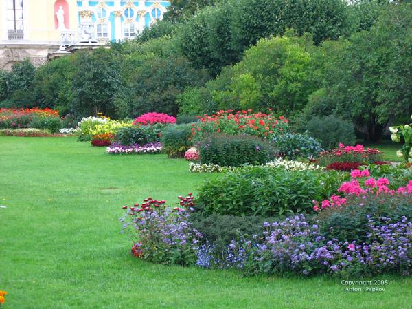 Августовские цветники. Фото Антона Папкова
