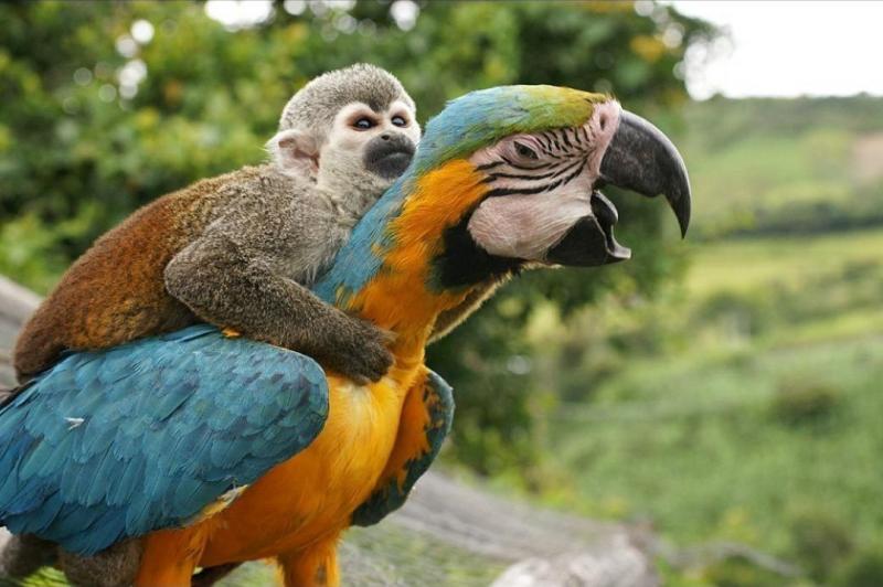 10. Покатай меня, большой попугай большая черепаха, животные, покатай меня, прикол, смешно, фото