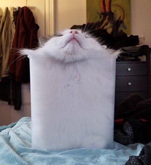 Доказательство, что кошки — это жидкость