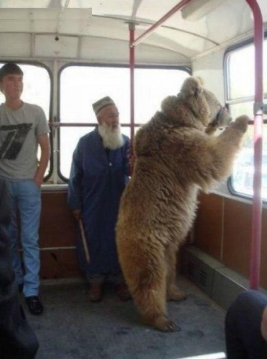 Ничем не примечательный пассажир. | Фото: ru.net.
