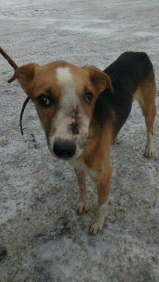 Собака бродила по улицам, в одиночку справляясь с болью… Пока замечательные люди не решились заглянуть ей в глаза