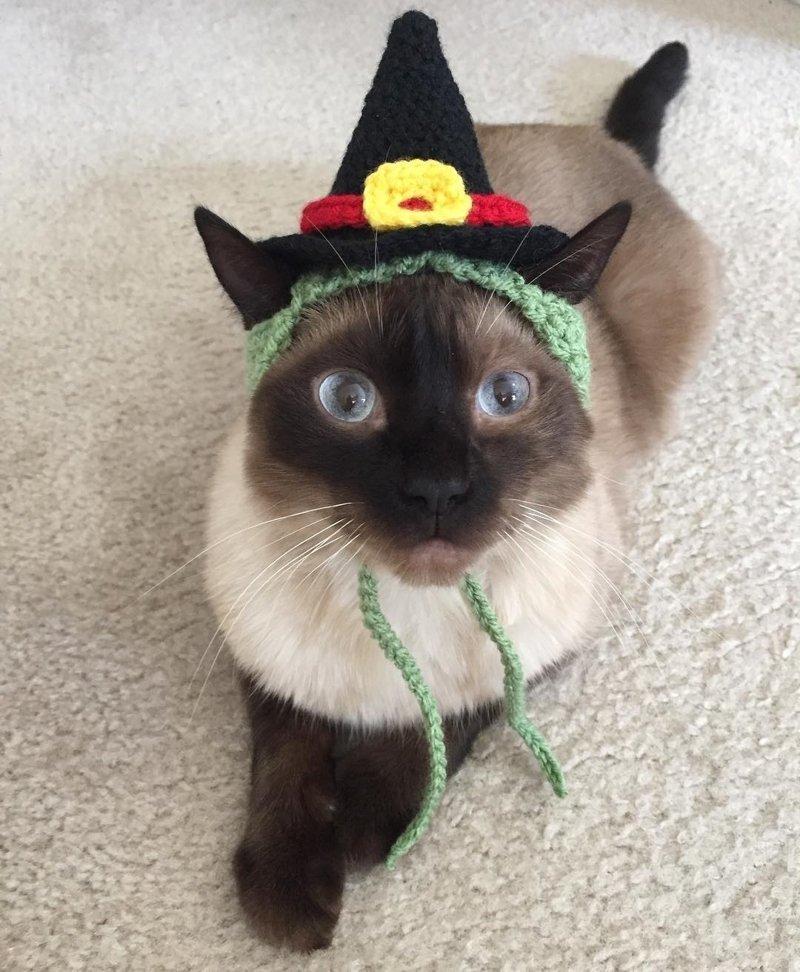 25+ очаровательных котиков в шапках для поднятия настроения животные, котики, котики в шапках, милота, мимими