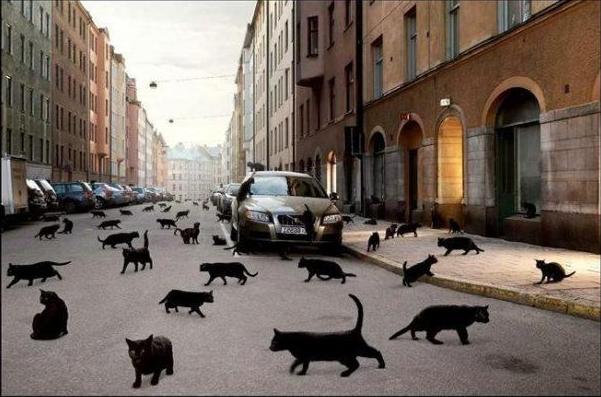 Если черный кот разбил зеркало пустым ведром…