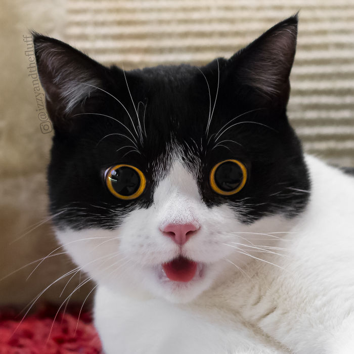 начала фото больших удивленных глаз грызуна