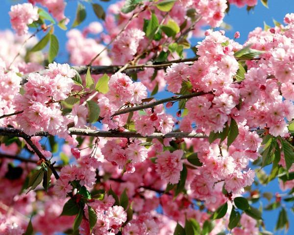 Завтра наступит астрономическая весна