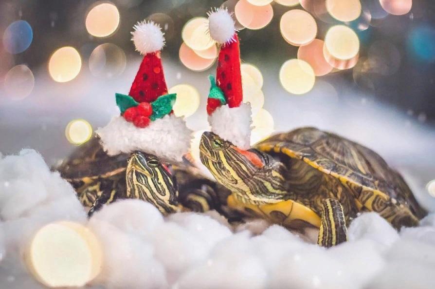 Знакомьтесь, Squishy и Rosy: черепахи, у которых много подписчиков в Instagram