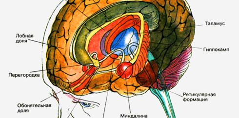 10 самых необычных структур головного мозга