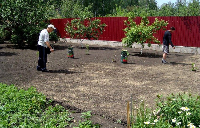 Газон на даче: как сделать зеленую лужайку своими руками 80