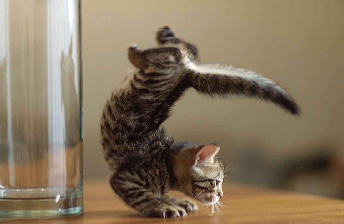 Коты и котята прикольные картинки, поздравлением