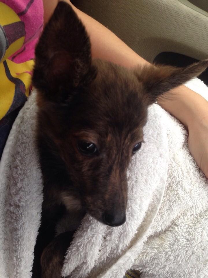Голодающий щенок выглядывал из переноски… В ту секунду его заметила Настя
