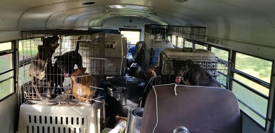 Он готовы был спасти всех… Мужчина помог десяткам котов и собак перед началом урагана!