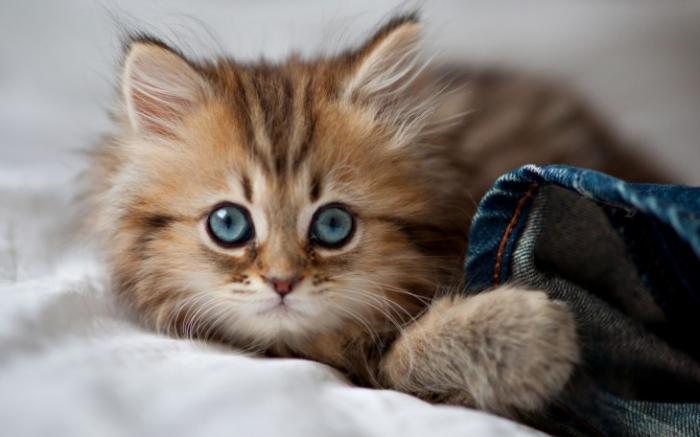 7 фактов о котах