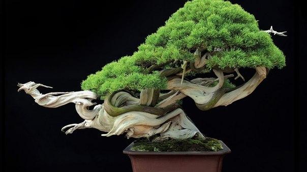 Искусство бонсай