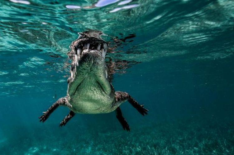 Рандеву с крокодилом животные,крокодил,опасность,фотографии