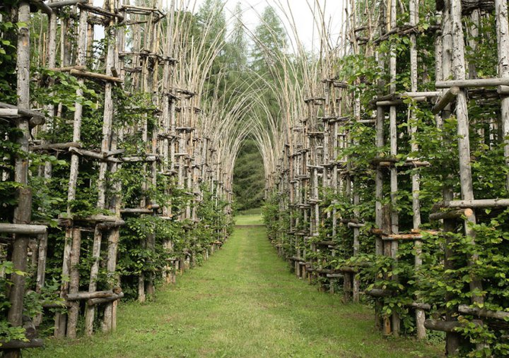 Величественный собор из живых деревьев