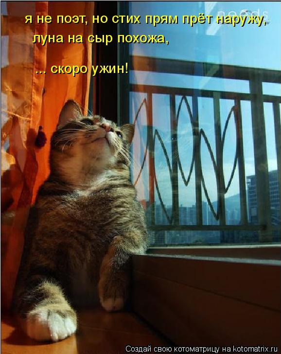 Котоматрица: я не поэт, но стих прям прёт наружу, луна на сыр похожа, ... скоро ужин!