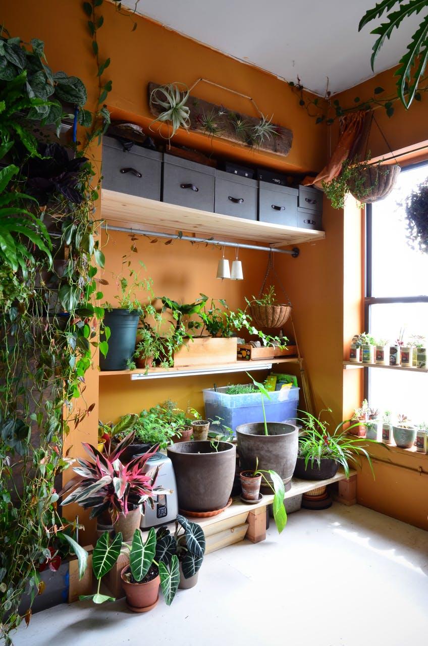Множество горшков с растениями - фото 01