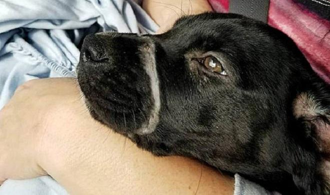Что-то белело на мордочке щенка…Это была стяжка, сжимающая челюсти несчастной собаки, не давая ей открыть рот
