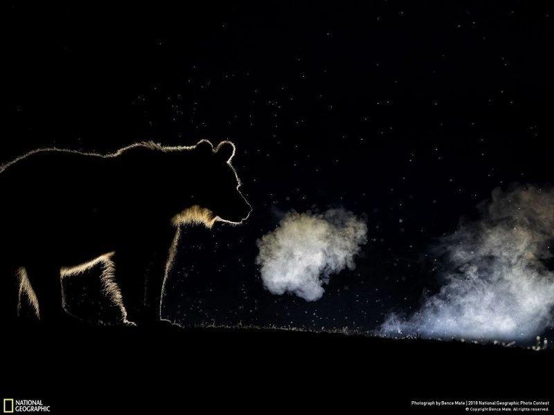 Дыхание, Бенс Мейт national geographic, конкурс, красота, природа, удивительно, фото, фотография, фотоподборка