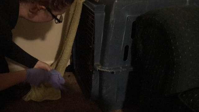 В углу комнаты стоял пластиковый ящик! А внутри были заперты 2 семимесячных щенка