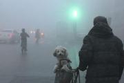 Густой туман окутал централь…