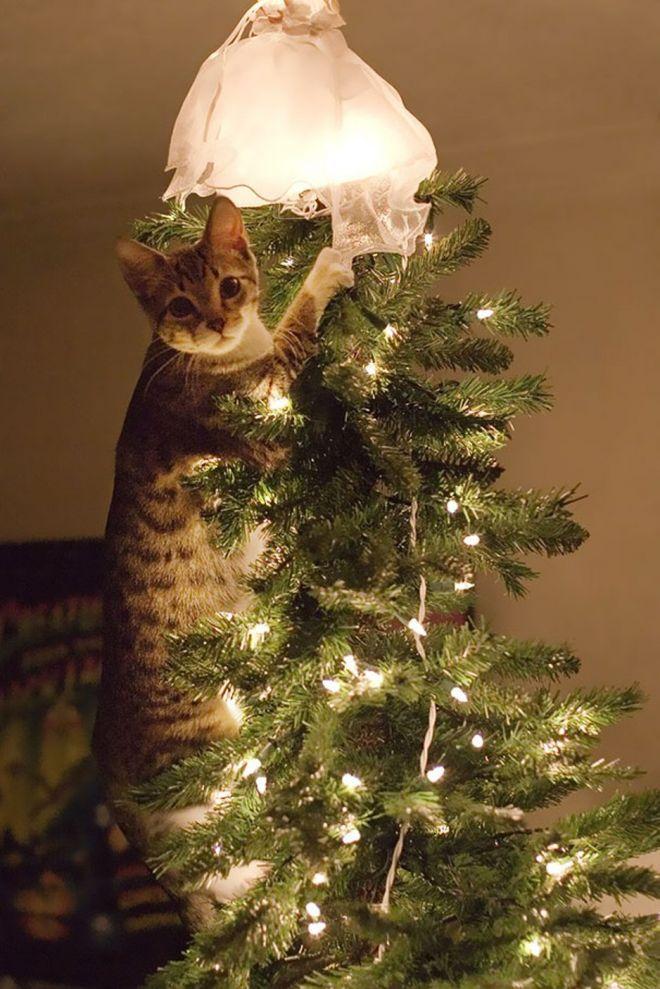 коты и елки прикольные фото термином