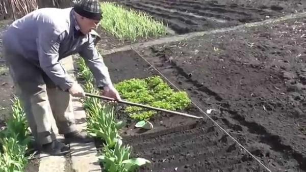 """""""Огородные вершки"""" - способы посева"""
