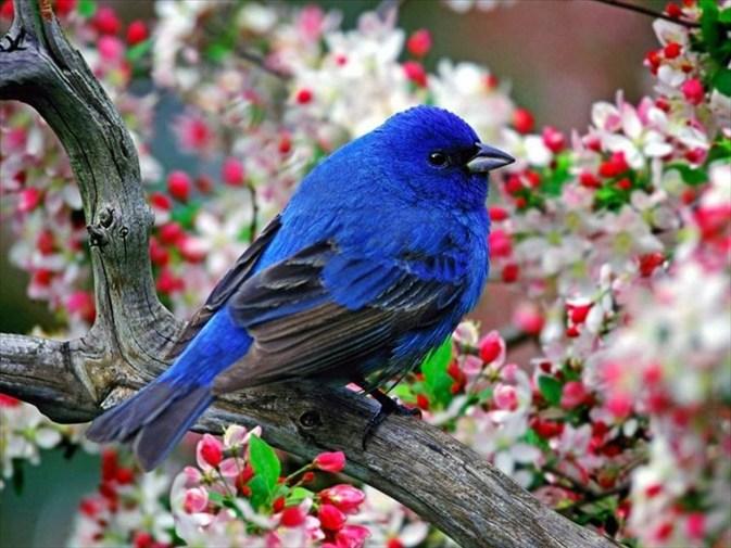 Картинки зимующих птиц на северо западе