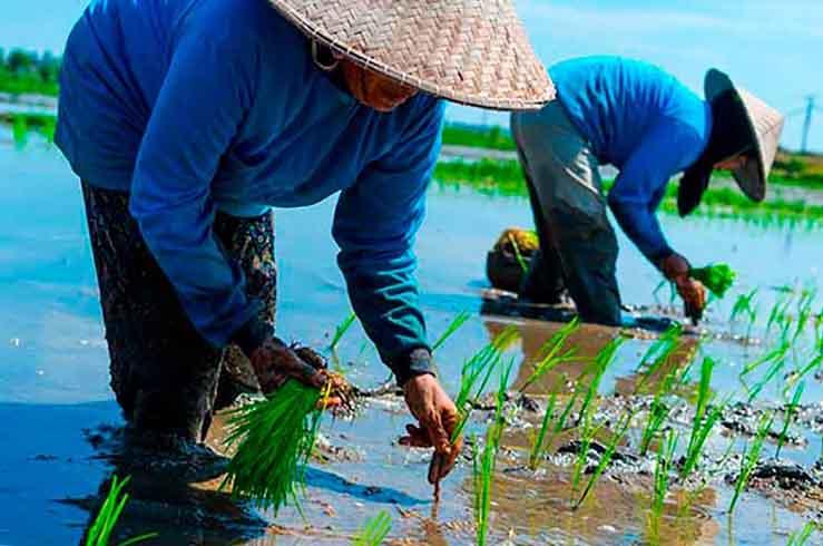 Будни сельскохозяйственных жителей Вьетнама