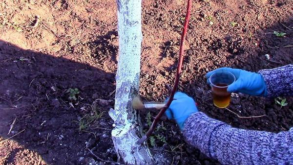 Кисточкой обрабатываем нижнюю часть ствола дерева