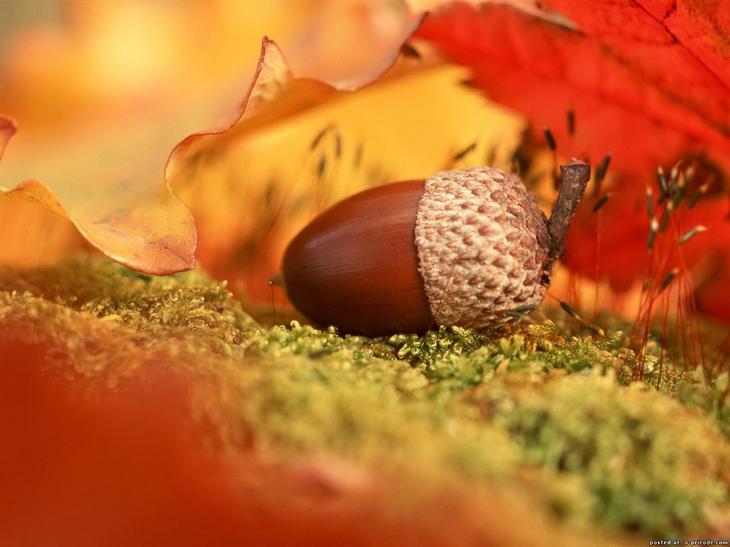 Осень. Последние дни.