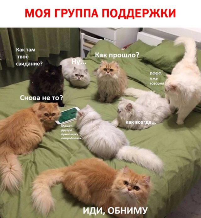 Подборка смешных картинок  смешные картинки