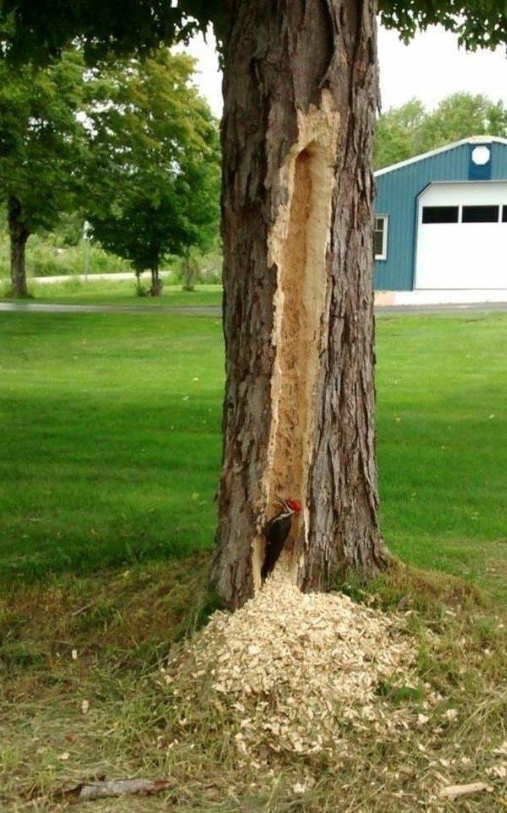 15. «Не нравится мне это дерево!» в мире, вредители, животные, пакости, прикол, юмор