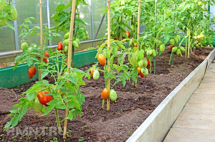 Выращивание овощей в зимний период