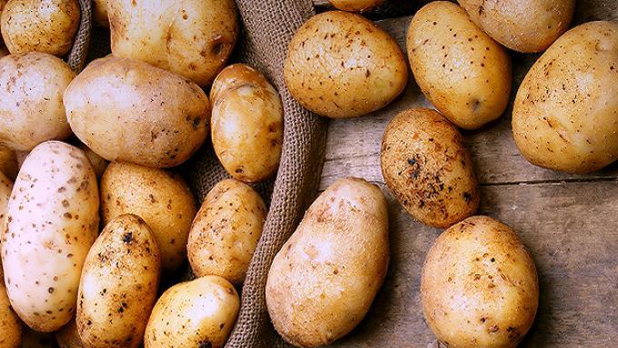 Картошечка-спринтер: способы ускорить урожай