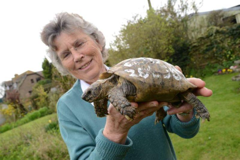 109-летняя черепаха вернулась к хозяйке после года, проведенного в бегах