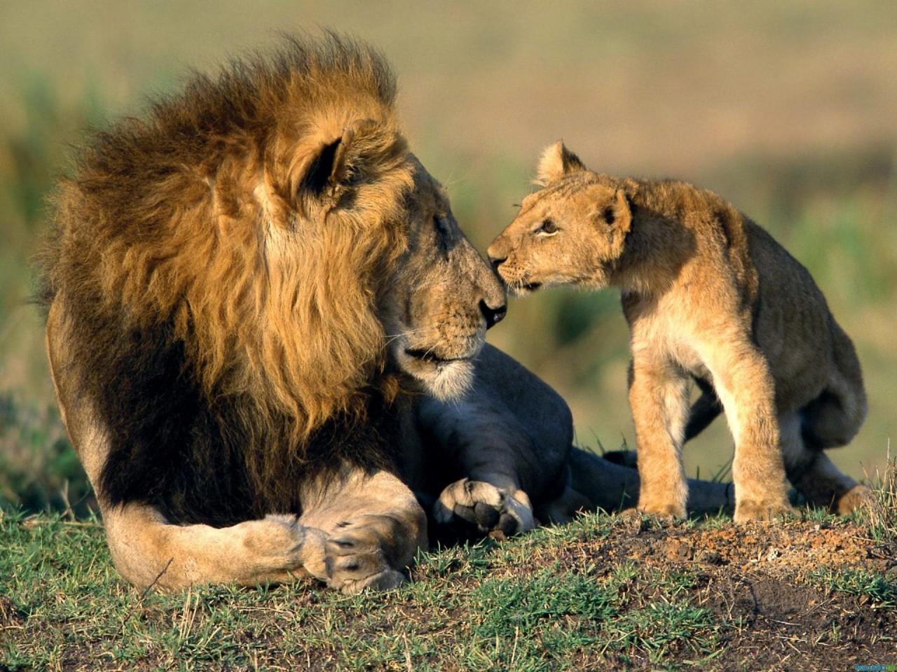 Письмо отца к сыну (о единст…