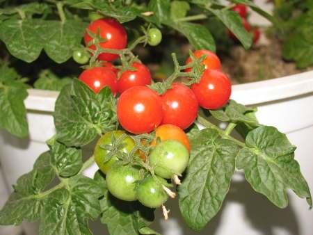 Вырастить свои овощи к Новому году реально!