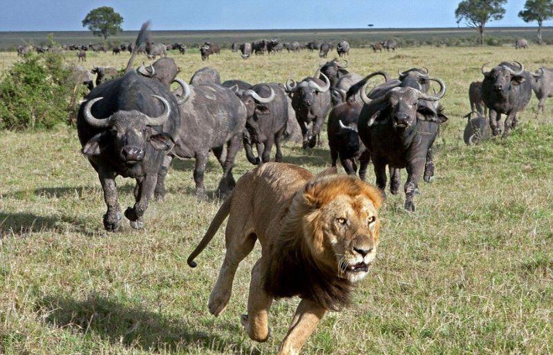 Лучшие охотники в мире животных